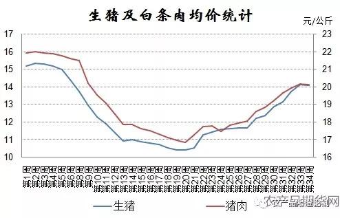 全国生猪出场均价及白条猪肉批发价格在5月底先后反弹,直到近一周才出现滞涨回落,近三个月以来上涨幅度超过3元/公斤,并且生猪价格涨幅明显超过猪肉价格的涨幅,出现了价格整体上并未明显受到疫情的影响,在8月上中旬一直是处于明显的涨势,仅在最近一周才出现了滞涨调整,且生猪价格及猪肉价格都出现了神同步,只是幅度大小不一而已,可见非洲猪瘟对猪市影响较为有限。不过非洲猪瘟感染猪群死亡率造成100%,没有相关疫苗更是将其蒙上了神秘的面纱,但是当地政府的处理极为迅速,对发生疫情的养殖场内的猪群采取封锁、扑杀、无害化处理、消毒等处置措施,并禁止所有生猪及易感动物和产品运入或流出封锁区,使得疫情得到有效处置。