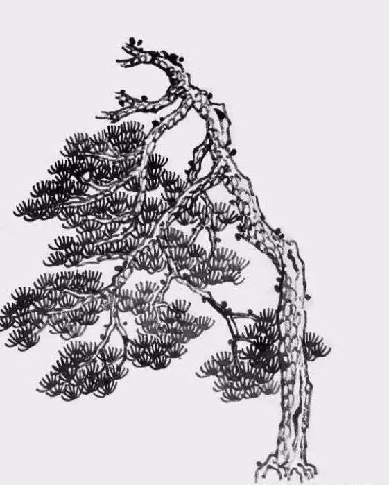 国画松树的画法:松果,松干,松针,简直就是点,线,面的转换