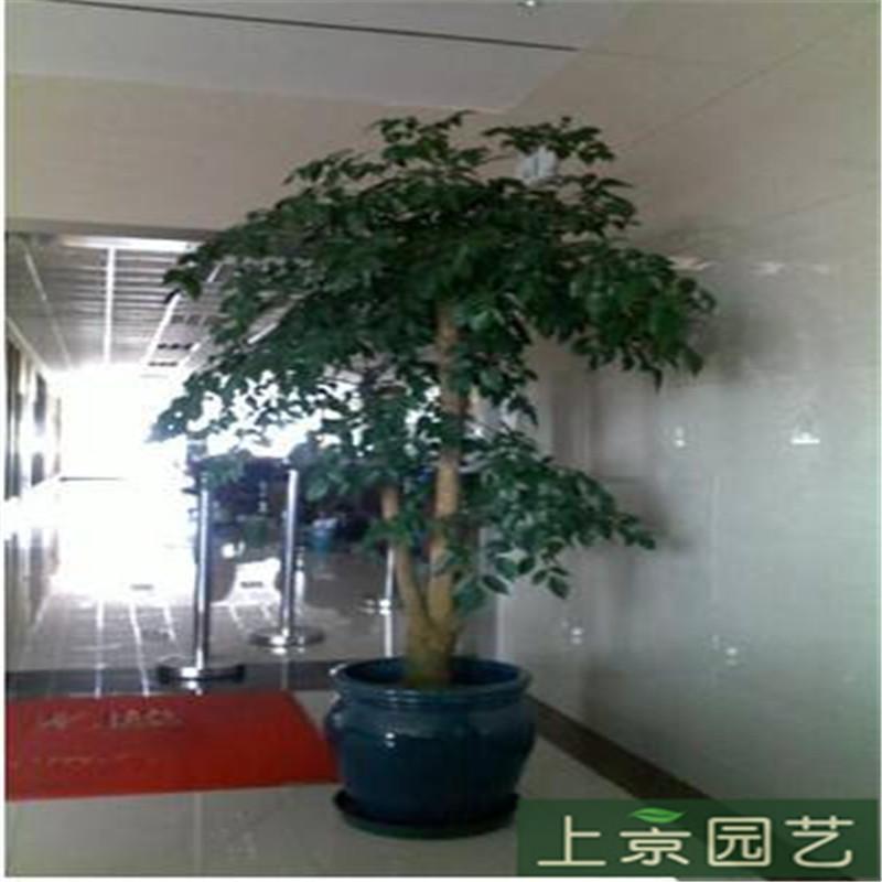 特大幸福树.jpg