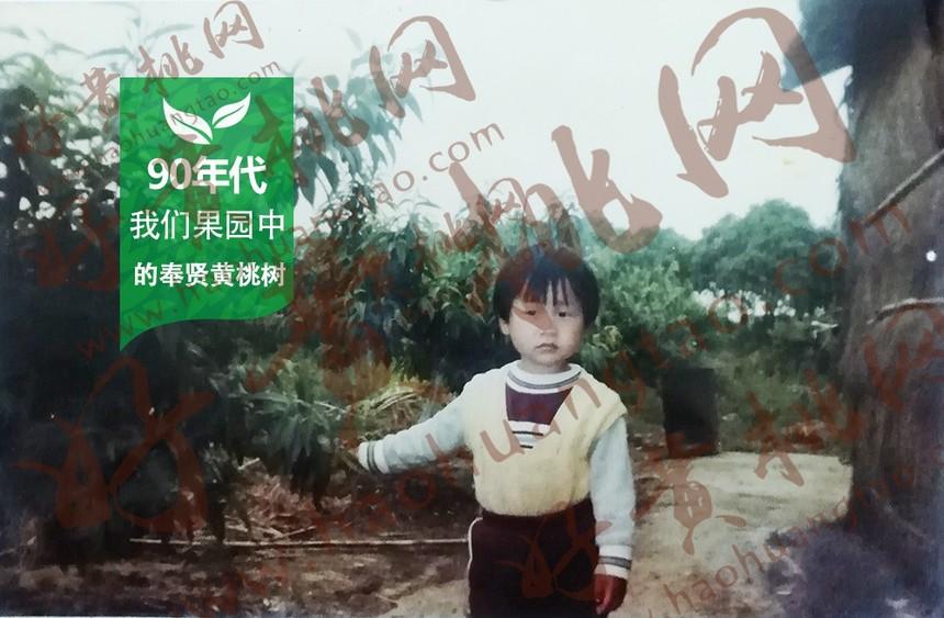 90年代奉贤黄桃果园,好黄桃网
