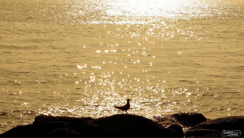 鼓浪屿海滩海鸟