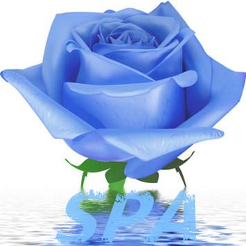 淡蓝玫瑰spa形象图-蓝色玫瑰花图