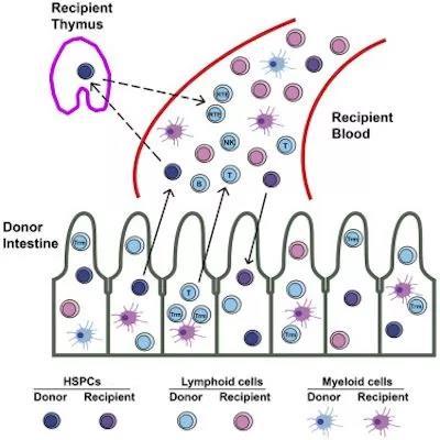 近期干细胞领域研究进展6.jpg