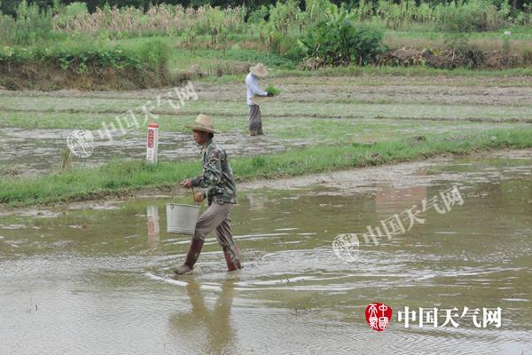 好天气促上林晚稻播种
