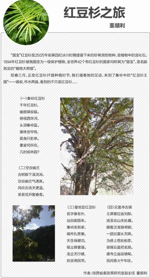 澳门博彩红豆杉第二期报纸出版|公司月报-陕西省澳门博彩生物工程股份有限公司