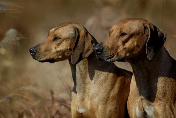 买狗需疾病控制与性格筛选