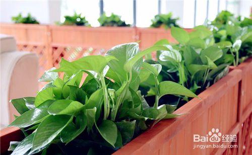 辦公室易活好養同時還可以凈化空氣且的綠植