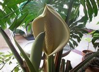 办公室装饰适合放哪些植物