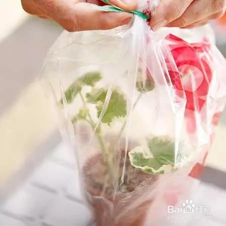 塑料袋的大用处