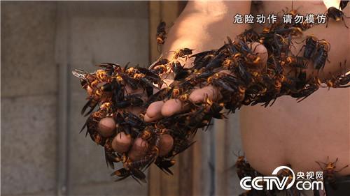 杀人蜂带来的千万财富(上) (2016.12.21)