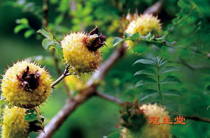 刺梨栽种技术之花果管理要求