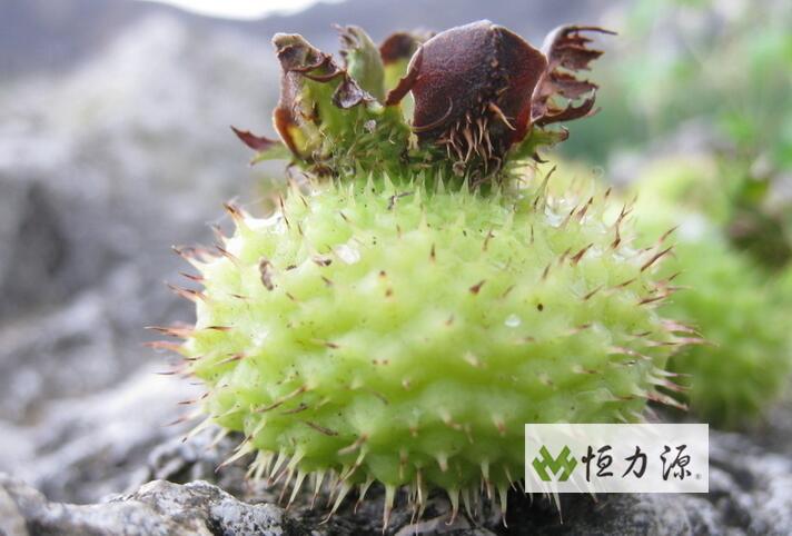 刺梨饮料 (16).jpg