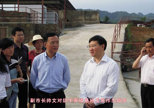 副市长帅文对奶牛养殖基地发展做出指示.jpg