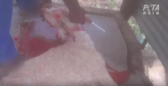 视频曝光工人活杀山羊