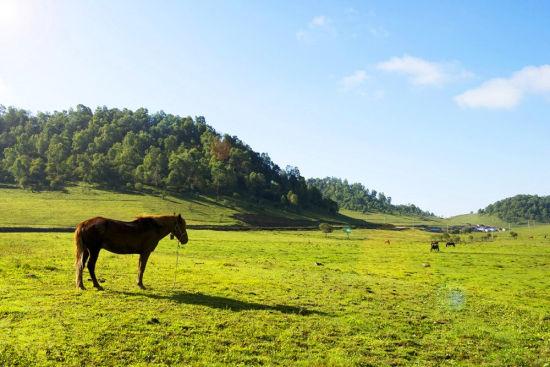 关山牧场(摄影/日月为明)