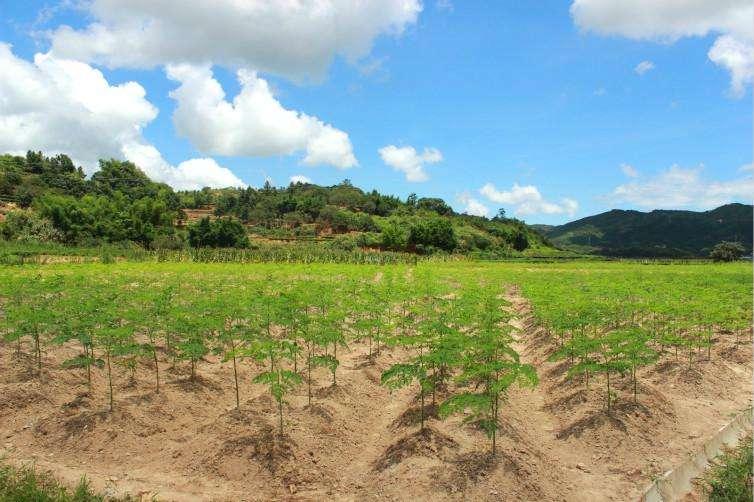 重庆农经ㅣ返乡当农民 种下一片致富林