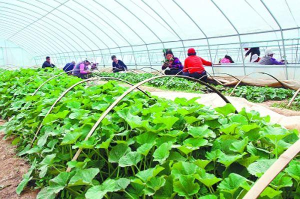 """农业报告ㅣ《重庆市蔬菜产业发展""""十三五""""规划》"""