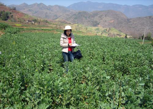 重庆市种植业主推技术——无公害蚕豆高产栽培技术