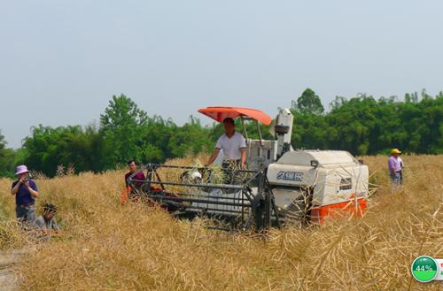 重庆市种植业主推技术——油菜全程机械化种植技术