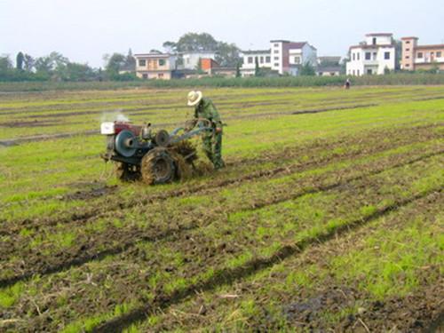 重庆市种植业主推技术——稻田油菜免耕直播轻简栽培技术