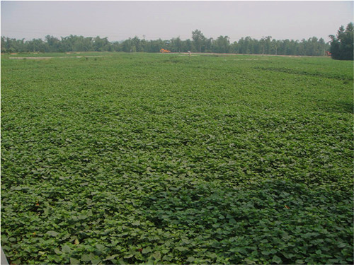 重庆市种植业主推技术——高淀粉甘薯标准化栽培技术