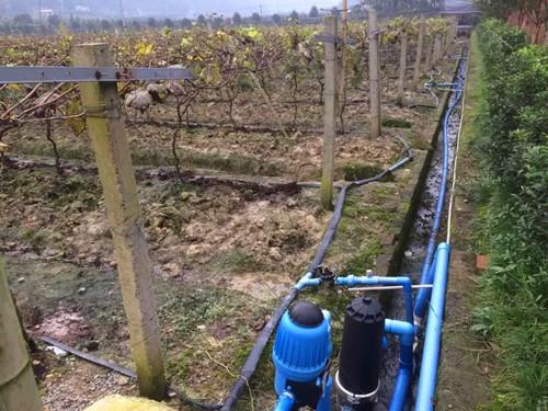 图片1、葡萄滴灌模式