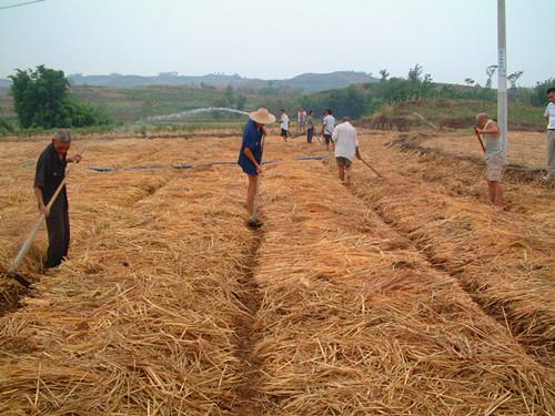 重庆市种植业主推技术——耕地保护与质量提升技术
