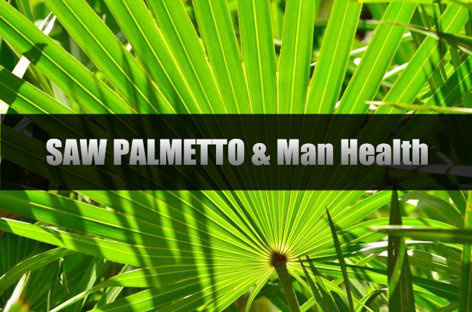 Saw Palmetto undefined Man health.jpg