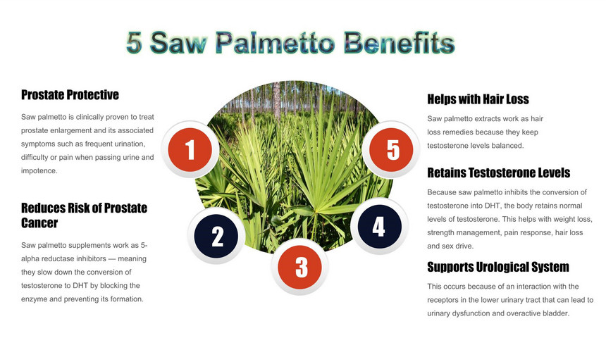 Saw Palmetto Extract Benefit_副本.jpg