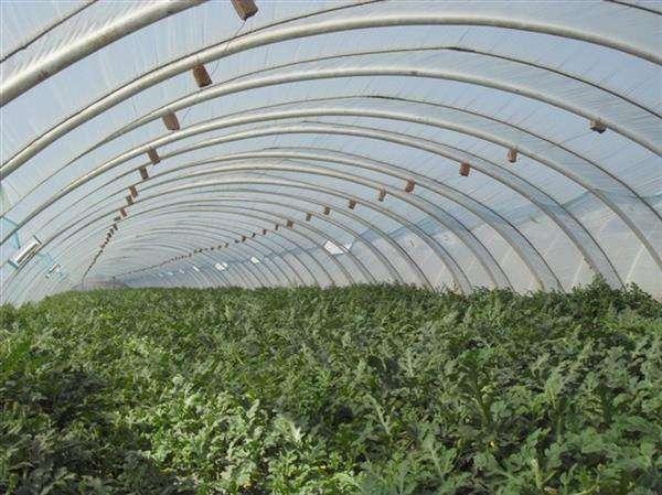 蔬菜大棚2.jpg