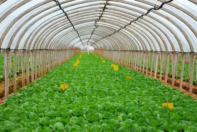 蔬菜大棚1.jpg
