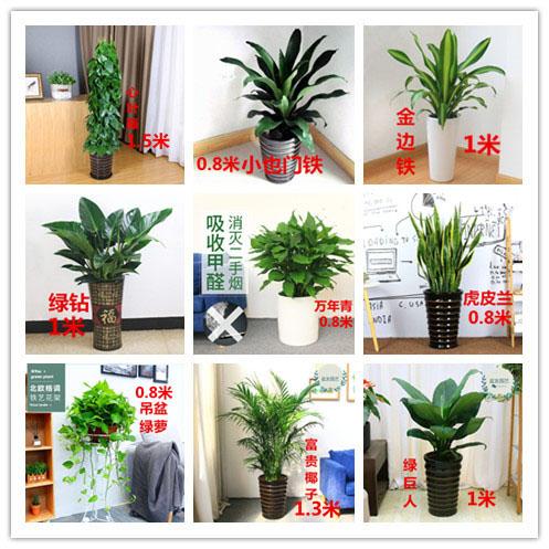 小植物.jpg