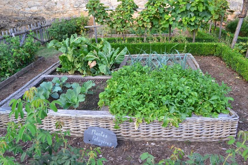 千图网-绿色的菜园.jpg
