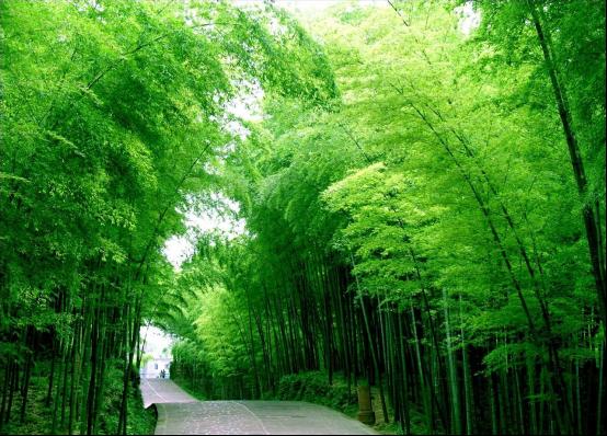 """向绿色进发!比亚迪""""新能源 环保主义""""2万步徒步挑战上海站招募!"""
