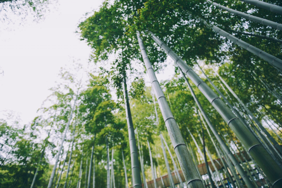 比亚迪绿色徒步:连接车与人,推进环保主义大梦想