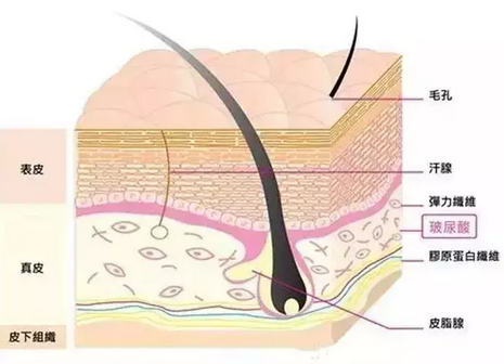 面部生理结构图