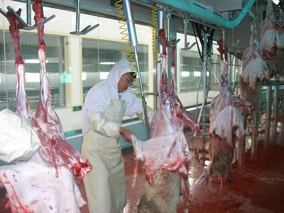 羊屠宰機械、歐式輸送線,預剝皮.jpg