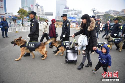 春运期间,昆明铁路警方每天都会派出五只警犬和五位训导?#20445;?#22312;火车站进行安保工作。2月8日,训导员带着爱犬在昆明火车站巡逻。中新社记者 刘冉阳 摄