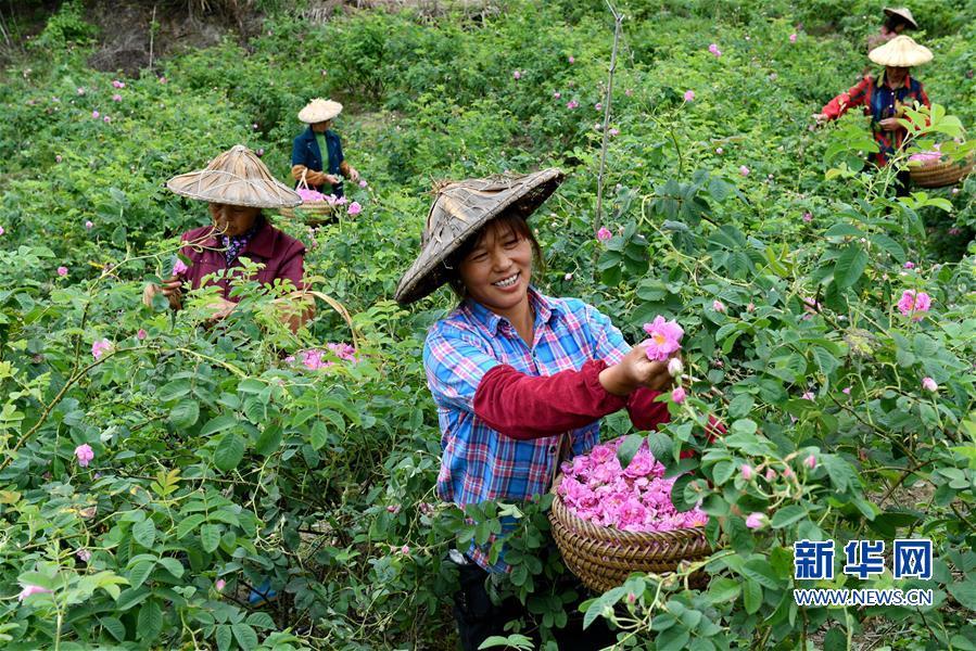 (社会)(1)发展生态产业 助推乡村振兴