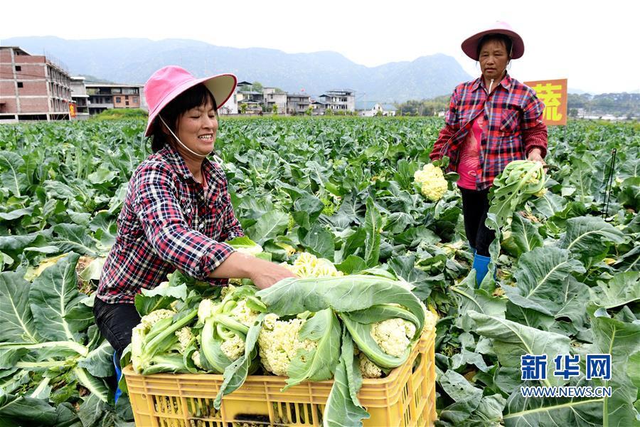 (社会)(4)发展生态产业 助推乡村振兴