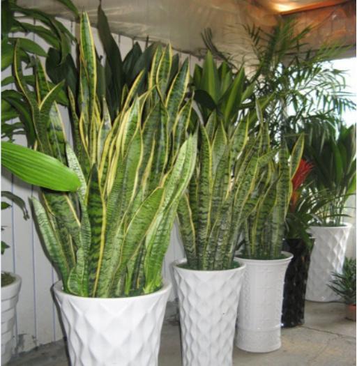 植物清除法