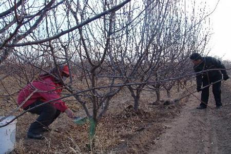 传统肥料施肥方式