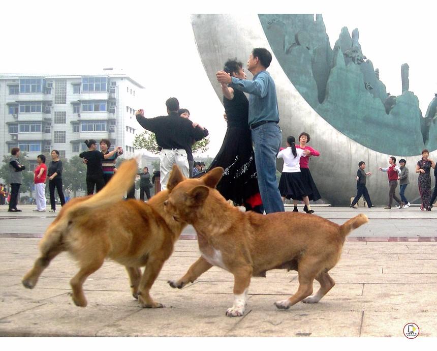 《舞学奇才》  作者:章汉根 电话:18970328092 单位:上饶市公安局交警支队直属一大队 拍摄:佳能相机(说明:近年,上饶市信州区三江公园市民群众晨练时出现的一个有趣镜头,两只毛色一样的小狗似是学人跳舞,学得很像).JPG