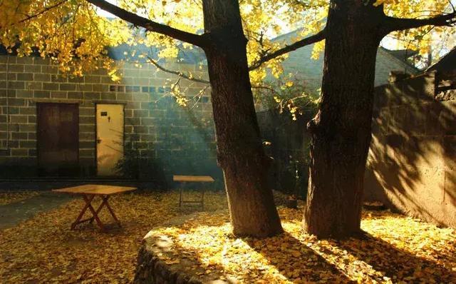 这才是河北的老院子!秋天美到骨子里