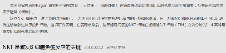 NKT 是激发B 细胞免疫反应的关键