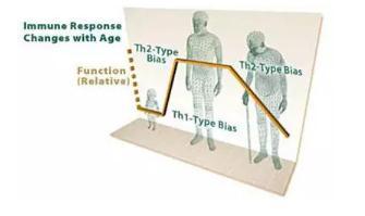 免疫系统也会衰老——趁年轻,快储存自己的免疫细胞!