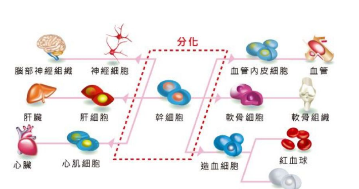 3D打印新突破!干细胞存储将为器官修复和疾病治疗提供更多可能
