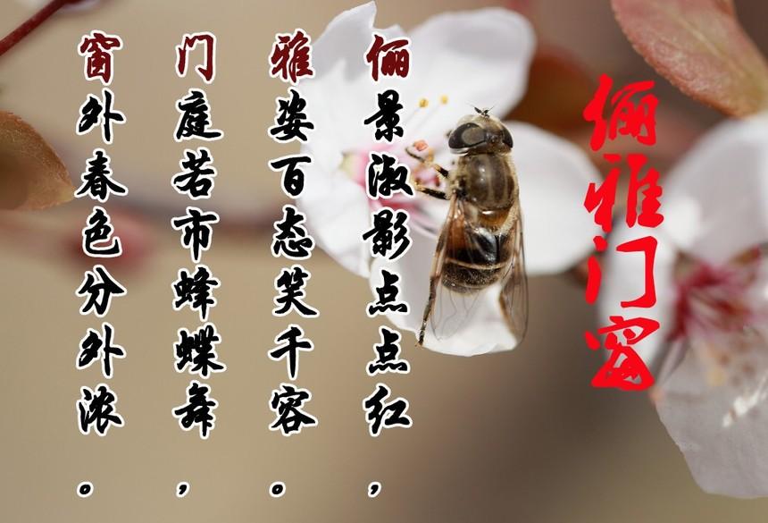 诗句2.jpg
