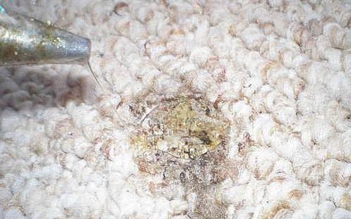 损坏的地毯
