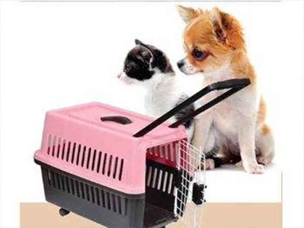 杭州宠物托运公司电话